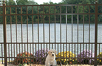 Delgard Elba Puppy Picket Aluminum Fence